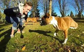 boxer dog youtube duncan lou who the two legs youtube star