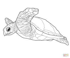 hawksbill sea turtle coloring page free printable coloring pages