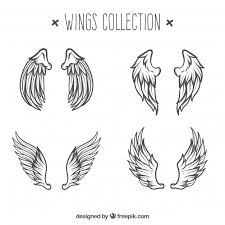sketch wing vectors photos and psd files free download