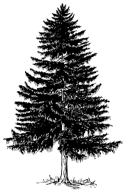 evergreen tree outline collection 65