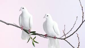 what does the dove symbolize reference com
