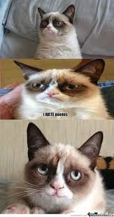 Smiling Cat Meme - rmx first smile of grumpy cat by darkotje meme center