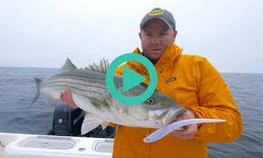 cape cod bay fishing report u2013 october 27 2016 u2013 salty cape