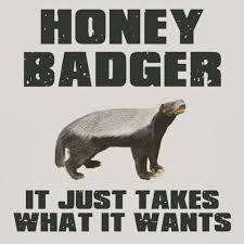 Honey Badger Memes - pin by andrea florez on my patronus pinterest honey badger