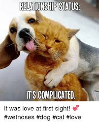 Dog Cat Meme - 25 best memes about dog cat love dog cat love memes