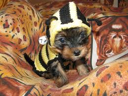 dog clothes for halloween dog sweater bee dog jumper puppy sweater puppy jumper small