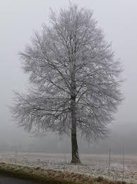 file amport frosty tree geograph org uk 1120120 jpg