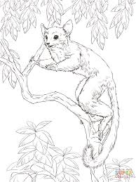 senegal bush baby coloring page free printable coloring pages