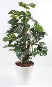 plante verte bureau 7 plantes vertes pour votre bureau gamm vert