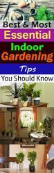 best u0026 most essential indoor gardening tips you should know