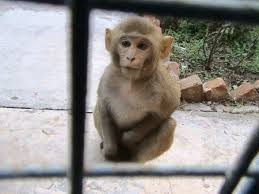 Baby Monkey Meme - coolest 30 baby monkey meme wallpaper site wallpaper site