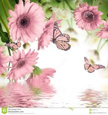 Gerbera Daisies Gerbera Daisies And Butterfly Stock Images Image 34536774