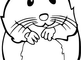 Coloriage De Hamster A Imprimer Coloriage Hamster € Imprimer In