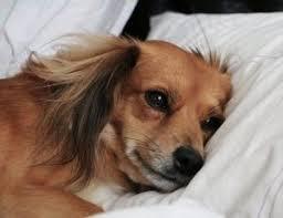 Sad Dog Meme - dog depressed after puppy dies archives dogsjar com