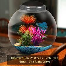 best 25 biorb fish tank ideas on biorb biorb ideas