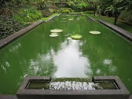 free images leaf lake river rose green swimming pool park
