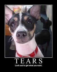 Sad Dog Meme - tears image macros