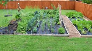 Make A Vegetable Garden by Chef U0027s Vegetable Garden Update Youtube