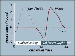 the dynamics of gaba signaling revelations from the circadian