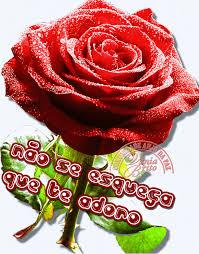 imagenes para enamorar con flores imágenes de flores con movimiento para enamorar en google plus