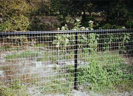Different Types Of Fencing For Gardens - chicken wire fence with black metal poles and frame n a