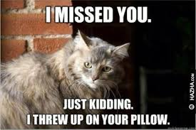 Miss You Meme Funny - 50 top i miss you meme jokes pictures photos quotesbae