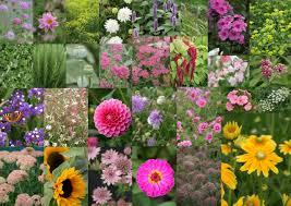 wedding flowers for september september flowers the flower farm