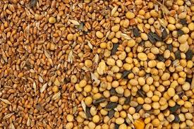 fodder blends for domestic animals from soybean seeds sunflower