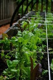 container vegetable gardening for beginners for alex i