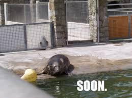 Soon Meme - soon seal soon know your meme