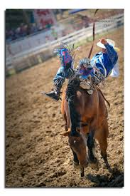 lindsay lexus coll xf 158 best they call the thing a rodeo images on pinterest barrel