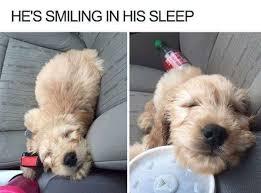 Dog Shaming Meme - he s smiling in his sleep cat cuteness dog dog shaming doge