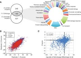 cross u2010species chemogenomic profiling reveals evolutionarily