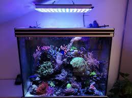 led reef aquarium lighting reef corals sps and lps orphek atlantik v4 led light orphek