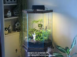 terrarium aquarium terrarium antique aquarium u2013 aquara info