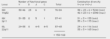 difference between kappa and lambda light chains immunoglobulin genes concept of dna rearrangement