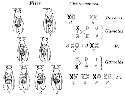 a simple blog by the boy of jambi biology patterns of heredity 1