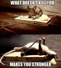 Mouse Memes - mouse meme kill strong funny pinterest funny picture quotes