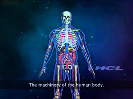 Pictures Of Anatomy Of The Human Body The Organ Systems Of The Human Body Youtube