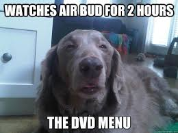 Stoned Dogs Meme - best of the really high dog meme 16 pics pleated jeans