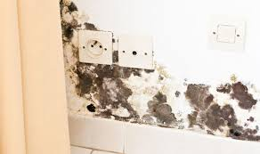 How To Clean Mildew In Bathroom How To Get Rid Of Black Mould And Damp In Your House Using This