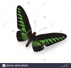 butterfly shadow stock photos butterfly shadow stock images alamy
