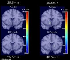 light up your brain images reveal men and women react differently to cigarettes daily