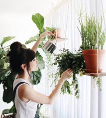 Plants For Bedroom 11 Plants To Keep In Your Bedroom For A Good Night U0027s Sleep Domino