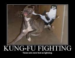 Funny Meme Cat - funny cat memes best cute kitten meme and pictures
