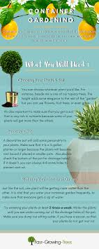 5 ways to get more for your buck with potted plants fast