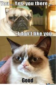 Meme Grumpy Cat - grumpy dog vs grumpy cat take 2 by mortisha411 meme center