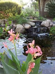 Pictures Of Backyard Ponds by Best 25 Small Backyard Ponds Ideas On Pinterest Small Garden