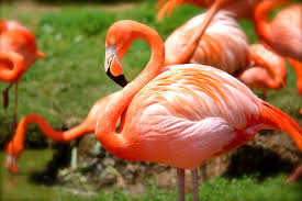 Hawaii wildlife tours images Top zoos and aquariums to visit on your next hawaii vacation jpg