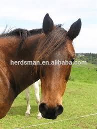 fake horse head pony false tail false forelock false mane extension buy false